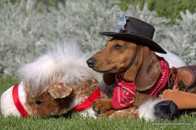 Sheriff Radley, Dachshund Rescue NW