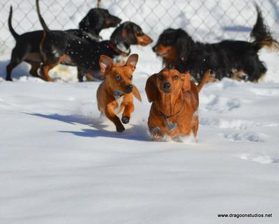 Radley playing in winter with rescues