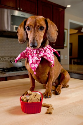 Dachshund and treats
