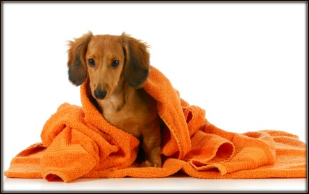 Dog Grooming Tips And Advice For Dog Owners