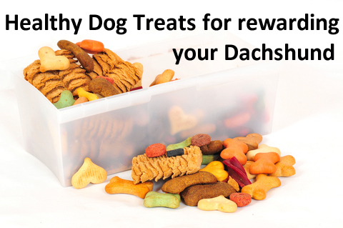 Health dog treats selection