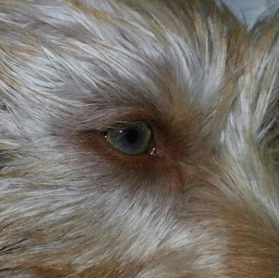 My Milo's pretty eye color :).