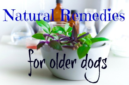 Learn more about older dog natural remedies